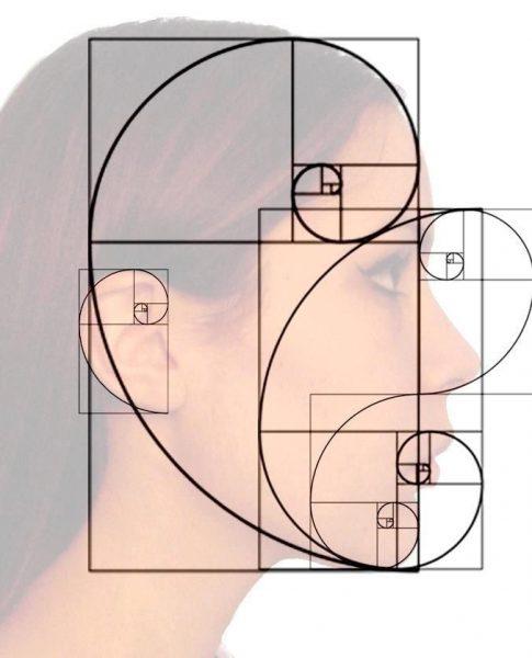 Fibonacci Face